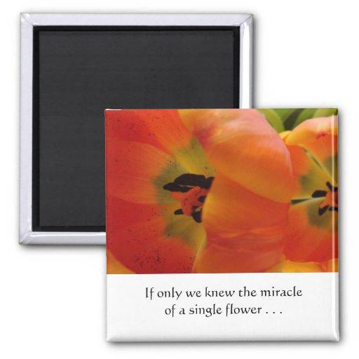 Orange Tulips in Bloom Fridge Magnet