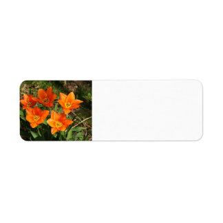 Orange Tulips Custom Return Address Label