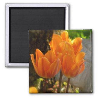 Orange Tulips Magnet