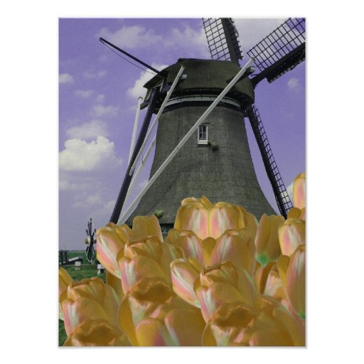 Orange Tulips Mill Holland Poster Art