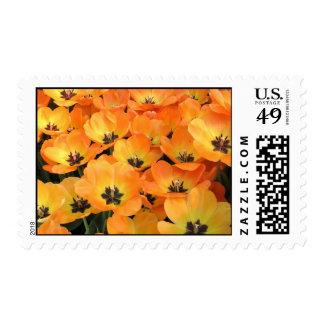 orange tulips postage stamps