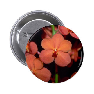 Orange Vanda flowers Pins