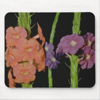 Orange Verbena (Stachytarpheta layennensis) flower Mouse Pad