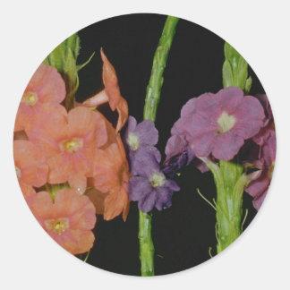 Orange Verbena (Stachytarpheta layennensis) flower Stickers