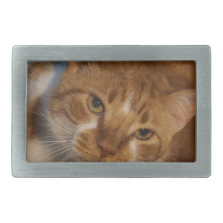 Orange & White Cat Belt Buckle
