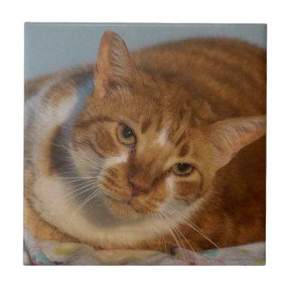 Orange & White Cat Ceramic Tile