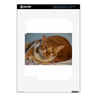 Orange & White Cat iPad 3 Decals