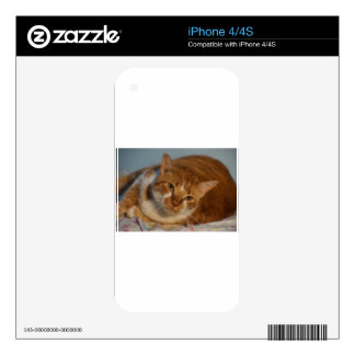 Orange & White Cat Skins For The iPhone 4S