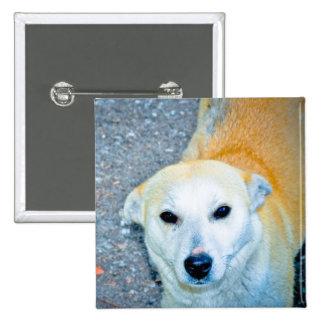 Orange white dog pinback buttons