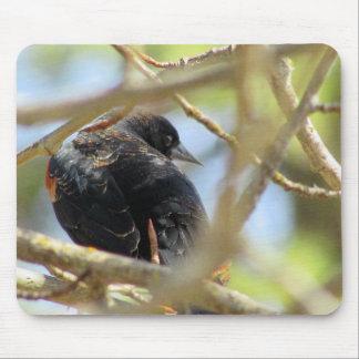 Orange Winged Black Bird Mouse Pad
