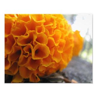 Orange World Impresiones Fotograficas