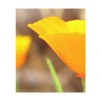 Orange Yellow California Flower Canvas Print