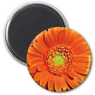 Orange Yellow Daisy Flower Magnet