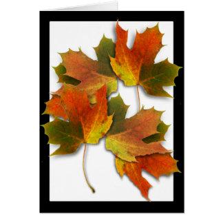 Orange & Yellow  Fall Leaves Card