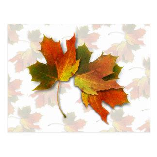 Orange & Yellow  Fall Leaves Postcard