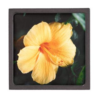 Orange Yellow Flower Picture of Hibiscus Jewelry Box