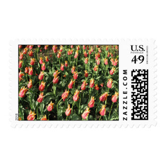 Orange/Yellow Frill Tulips Postage