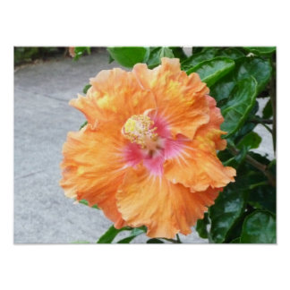 Orange yellow Hibiscus print