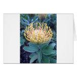 Orange/Yellow Lace Bud Blooming Card