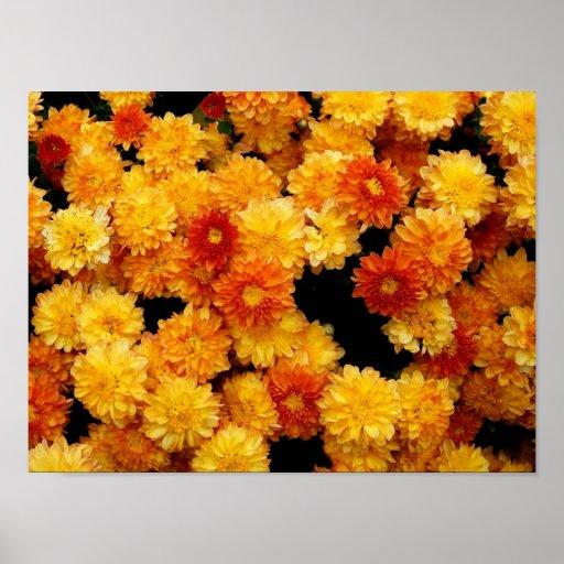 Orange Yellow Mums Poster