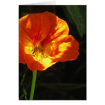 Orange-Yellow Nasturtium Flower Greeting Card
