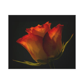 Orange & Yellow Rose Canvas