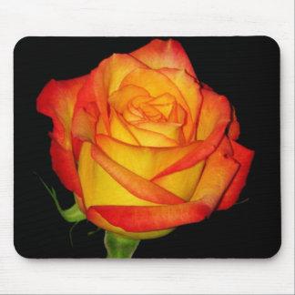 Orange-Yellow  Rose Mouse Pad
