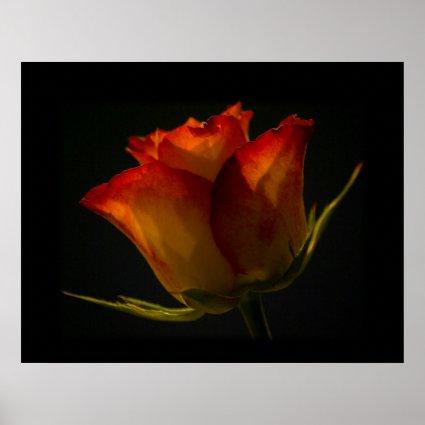 Orange & Yellow Rose Print
