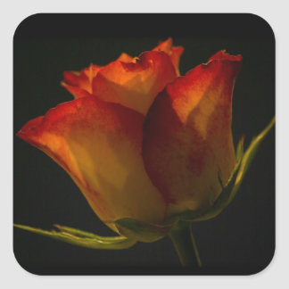 Orange & Yellow Rose Square Sticker