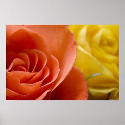 Orange & Yellow Roses Print