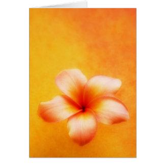 Orange Yellow Tropical Plumeria Hawaiian Greeting Card