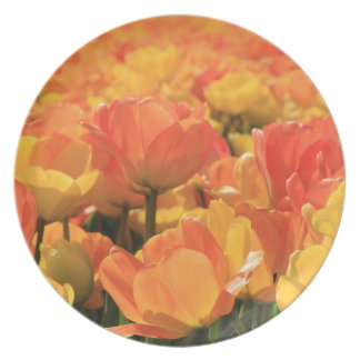 Orange yellow tulips by Thespringgarden Dinner Plate