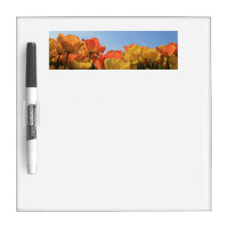Orange yellow tulips by Thespringgarden Dry-Erase Board