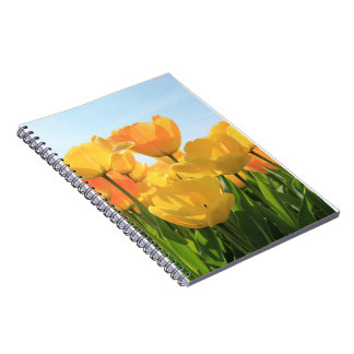 Orange yellow tulips by Thespringgarden Notebook