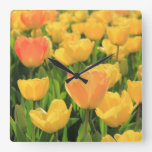 Orange yellow tulips by Thespringgarden Square Wall Clock