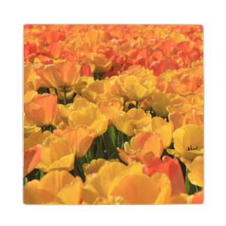 Orange yellow tulips by Thespringgarden Wooden Coaster