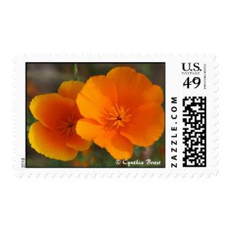 Orange You a Poppy Fan? Postage Stamps