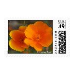 Orange You a Poppy Fan? Stamps