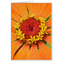 Orange Zinnia Card card