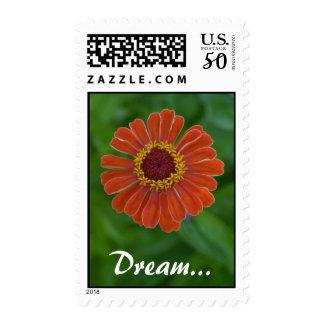 Orange Zinnia flower blossom up close, Dream Postage