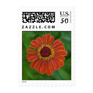 Orange Zinnia flower blossom up close stamps