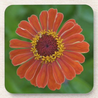 Orange zinnia flower coaster sets unique gift idea