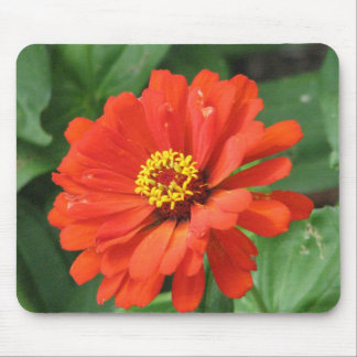Orange Zinnia Flower Mouse Pad