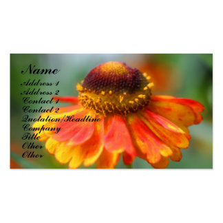 Orange Zinnia Flower Photography Business Card