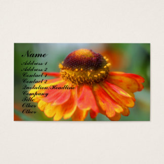 Orange Zinnia Flower Photography Business Card