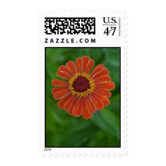 Orange zinnia flower postage stamps bulk discount