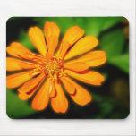Orange Zinnia Mousepads
