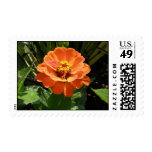 Orange Zinnia Postage Stamps