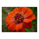 Orange Zinnia Wildflower Photo Card