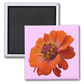 Orange Zinnia Wildflower Photo Magnet